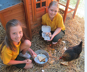 Photo of two female primary students, feeding chooks in the chicken pen and collecting eggs